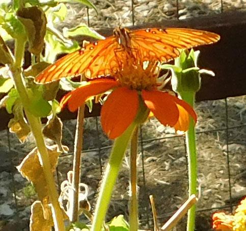 pretty sights found while walking thru the garden Fritfl11