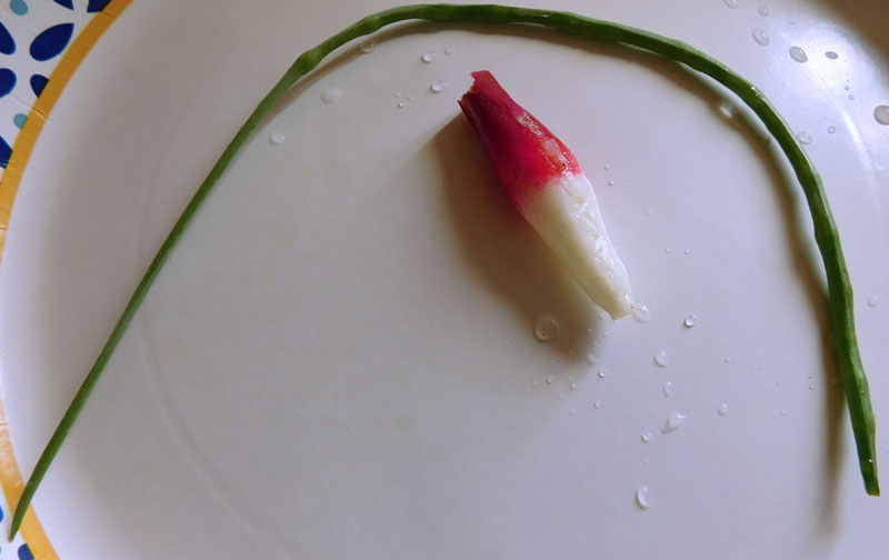 What are you eating from your garden today? - Page 7 Radish15
