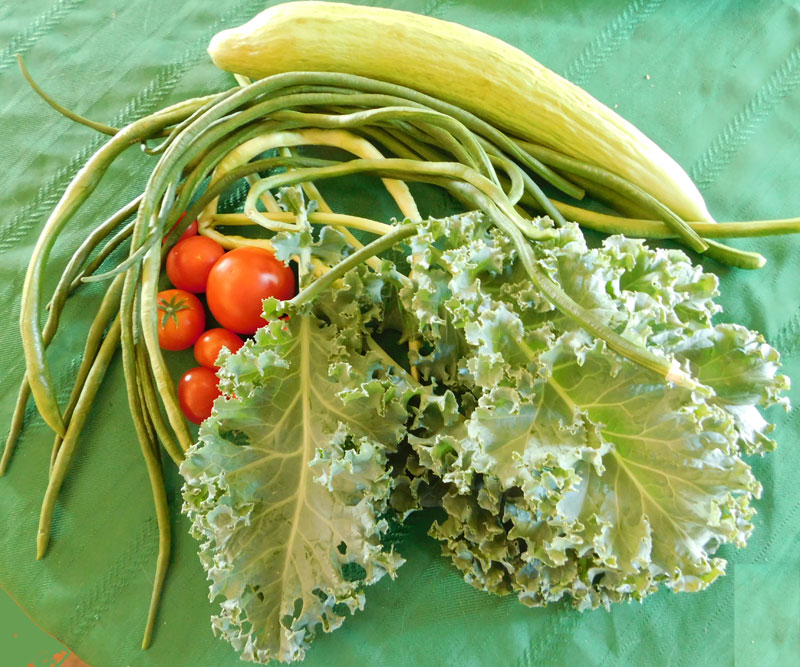 What are you eating from your garden today? - Page 3 Sepava10
