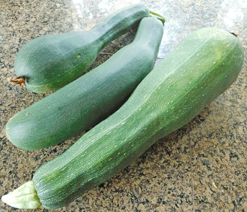 You may have too much Zucchini, when..... Zukes10