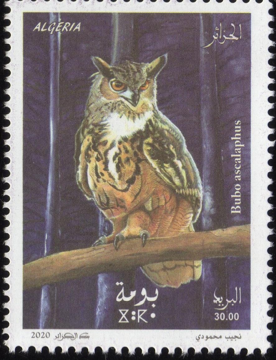 Emission N° 02/2020 Oiseaux  Img35510