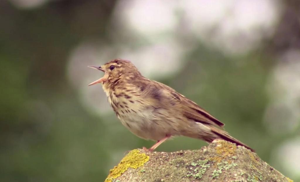 L'oiseau fait son nid Pa10