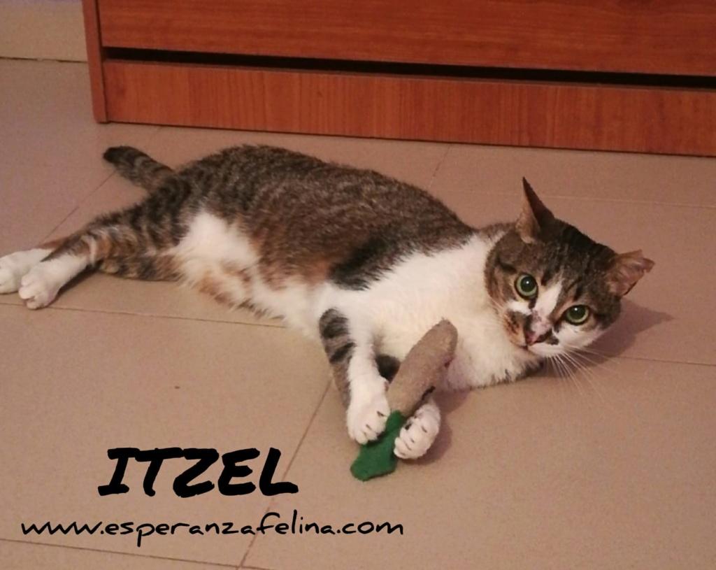Itzel, preciosa gatita. Álava. (Fec. Nac. Aprox. 01/07/2012) Itzel10