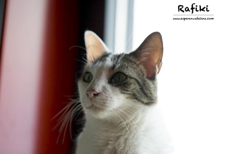 Simba y Rafiki, pareja muy especial en adopción. Alava (FN:15/09/15 ; 15/09/09) Rafiki10