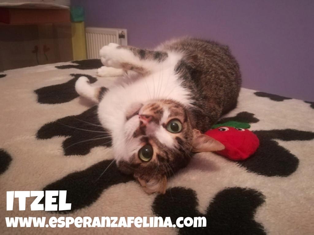 Itzel, preciosa gatita. Álava. (Fec. Nac. Aprox. 01/07/2012) Whats237