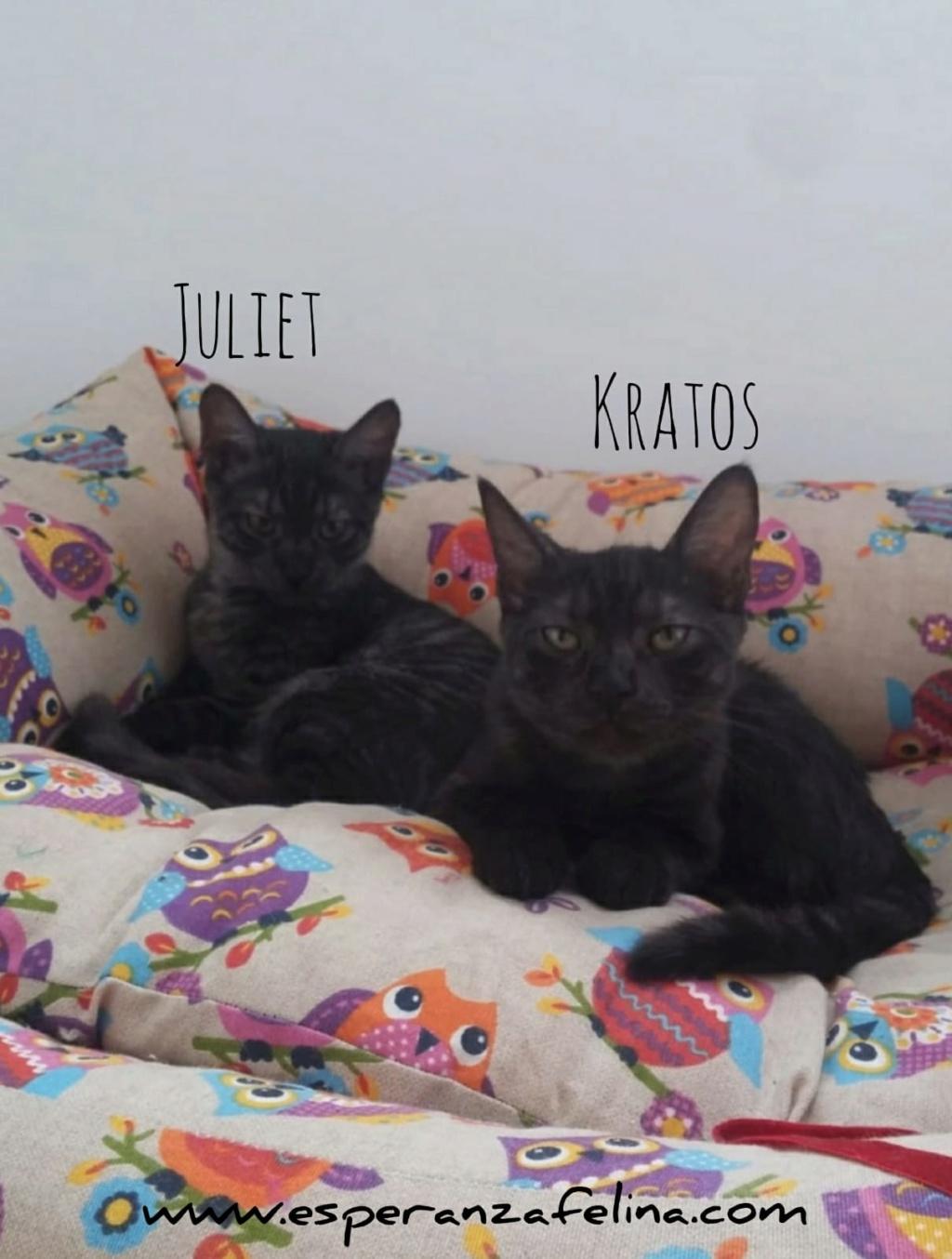 Kratos y Juliet, pareja de panteritas en adopción. Alava (FN aprox.: 1/7/2018) Whatsa56