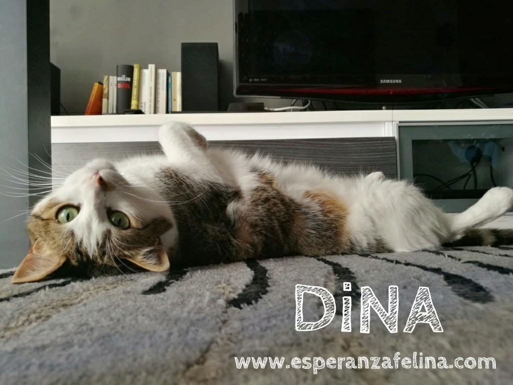 Dina, preciosa gata busca su hogar (Álava, fecha de nacimiento aproximada 10/04/2014 ) Whatsa80