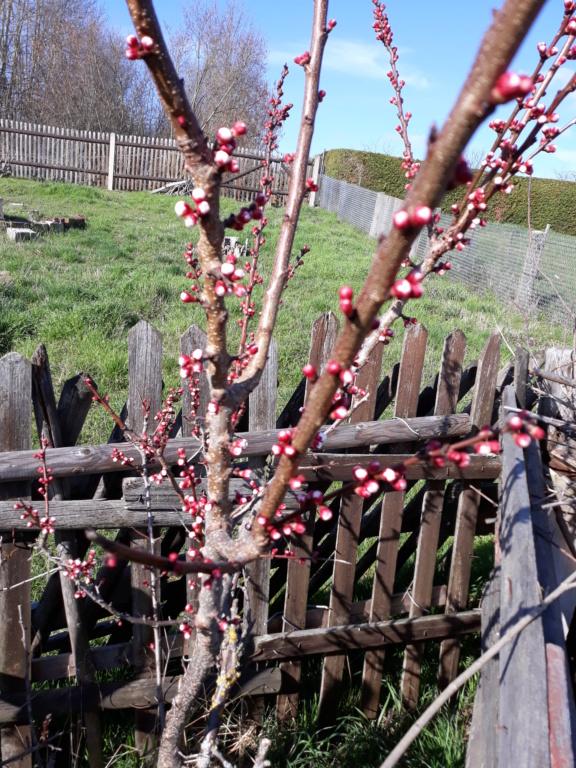 Erste Frühlingsboten im Garten und in Wald und Flur - Seite 88 20200316