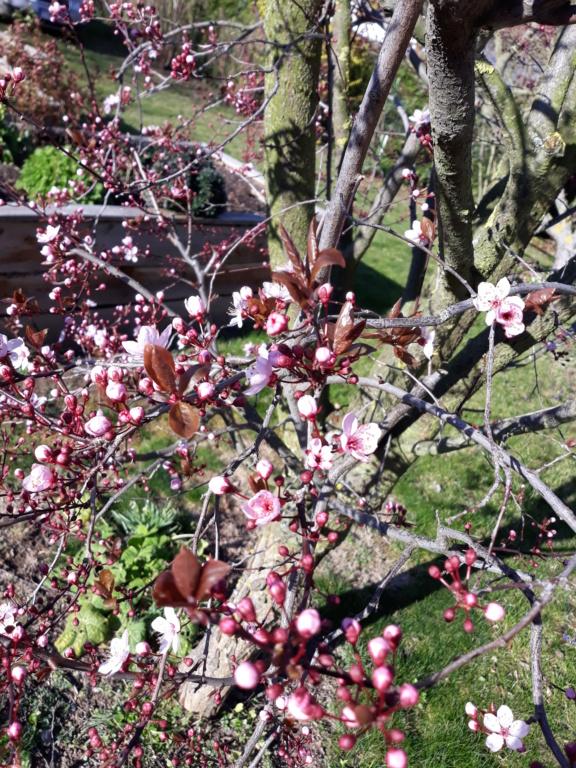 Erste Frühlingsboten im Garten und in Wald und Flur - Seite 89 20200318
