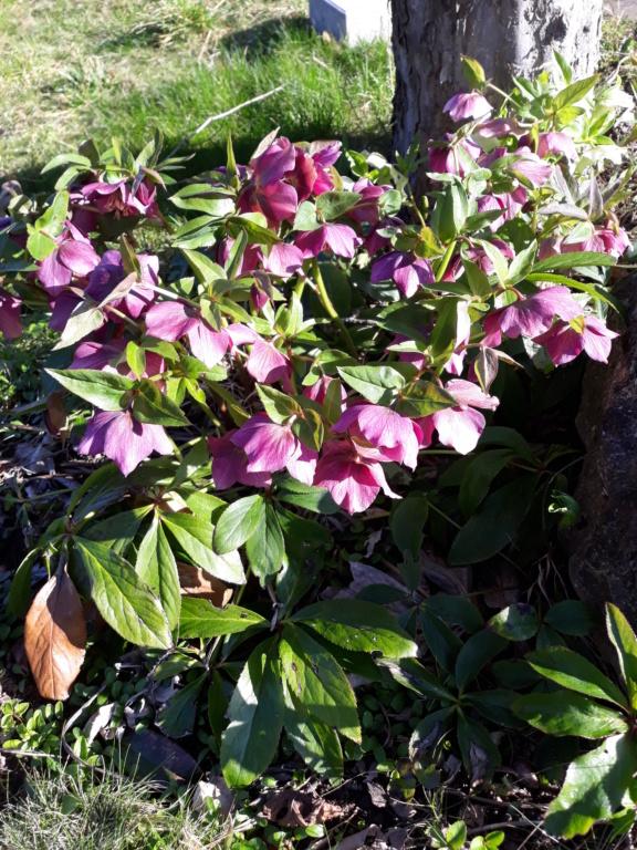 Erste Frühlingsboten im Garten und in Wald und Flur - Seite 89 20200319