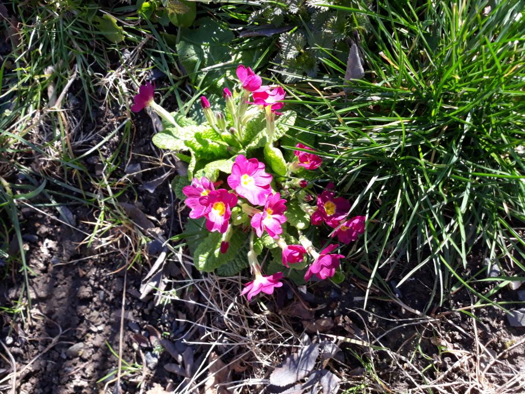 Erste Frühlingsboten im Garten und in Wald und Flur - Seite 89 20200320