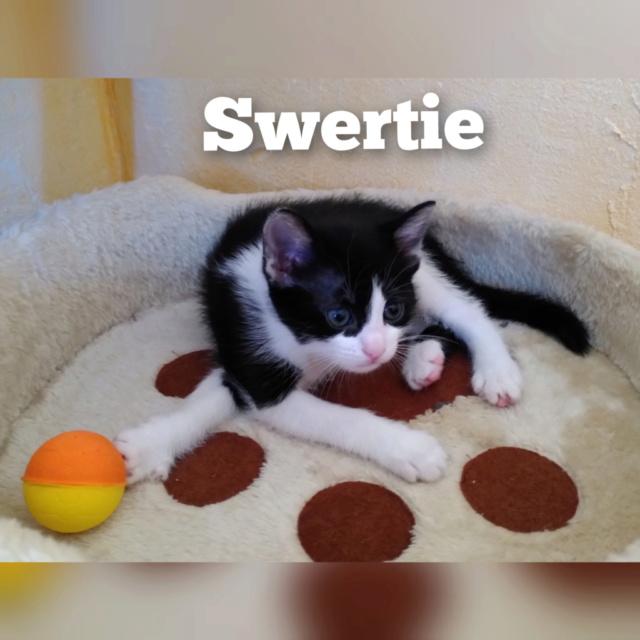SWERTIE - SUREAU - ZINNIA - TRINIE  Swerie10