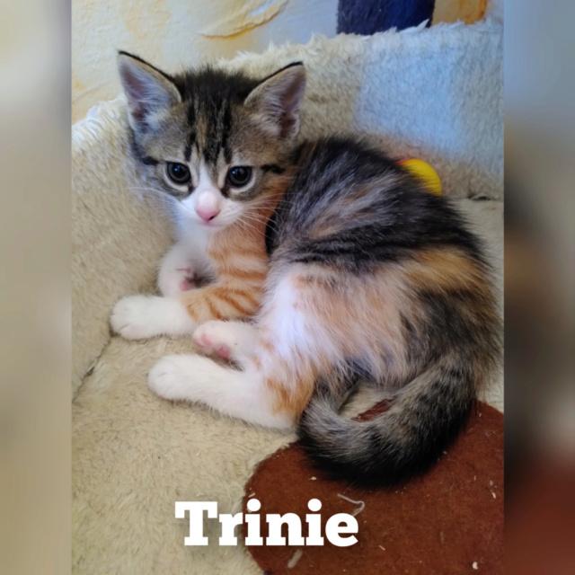 SWERTIE - SUREAU - ZINNIA - TRINIE  Trinie10