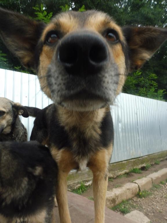 BANDIT - mâle croisé BA, de taille moyenne, né en 2012 (PASCANI) - REMEMBER ME LAND Bandit10