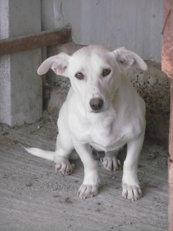 CASABLANCA - femelle croisée, taille petite à moyenne, née environ janvier 2017 - REMEMBER ME LAND Casabl10