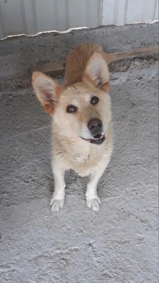 DOUDOU - mâle, croisé de taille petite - né environ en 2009 - REMEMBER ME LAND Doudou15