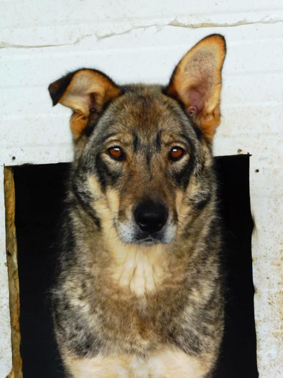 LUPI !! + de 3 ans de box !! - femelle , née environ en 2010, typée chien loup de sarloos, taille moyenne - REMEMBER ME LAND - Page 2 Lupi_410