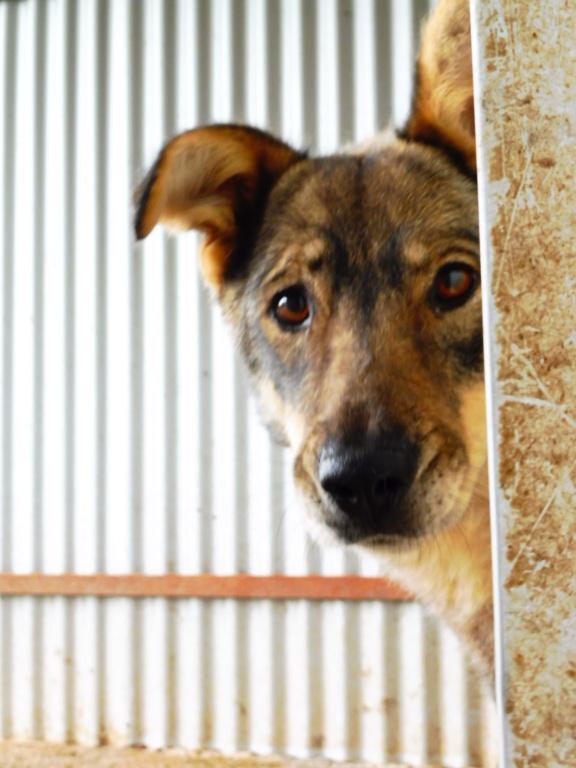 LUPI !! + de 3 ans de box !! - femelle , née environ en 2010, typée chien loup de sarloos, taille moyenne - REMEMBER ME LAND - Page 2 Lupi_810