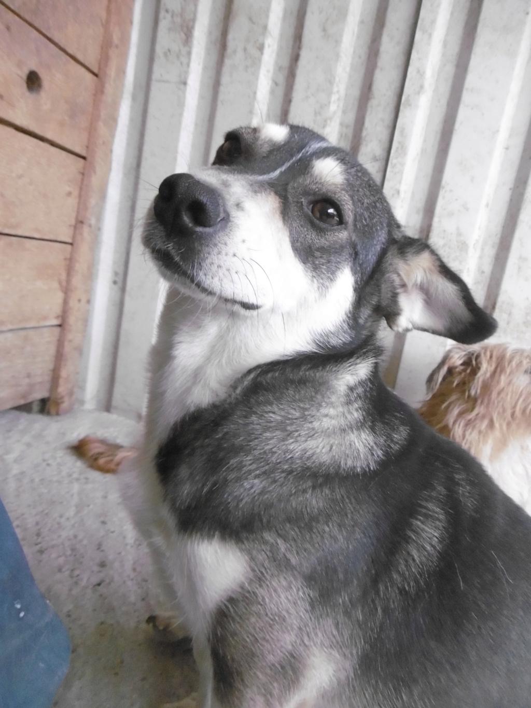 NINA (ex POMDAPI) - femelle de petite taille (12 kg) - née environ en mai 2015 - PASCANI - REMEMBER ME LAND - Adoptée par Gaelle (83) Pomdap18