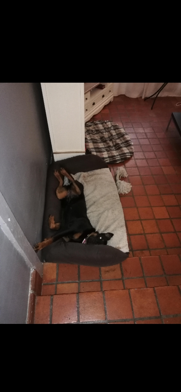 RIHANNA - femelle Rottweiler de taille moyenne, née environ en  2015 (PASCANI) - adoptée par Jessica (Belgique) - Page 4 Scree535