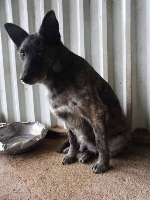 TIGRETTE - femelle croisée de taille moyenne, née en 2009 ( PASCANI) - REMEMBER ME LAND Tigret12