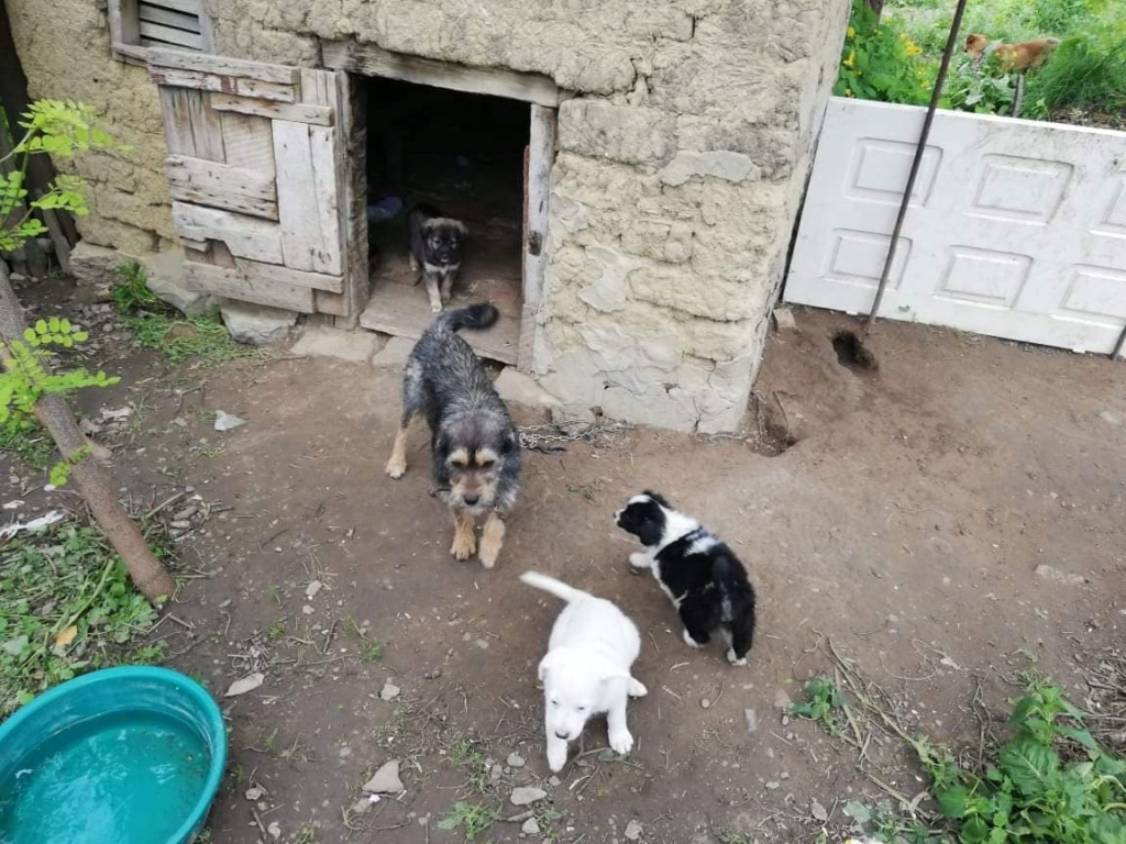 TINA /FEMELLE/AGE A VENIR /TAILLE PETITE  au refuge 62260910