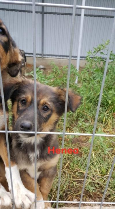 HANAE/FEMELLE/3 MOIS A PEU PRES/TAILLE PETITE A MOYENNE  REFUGE 66284610