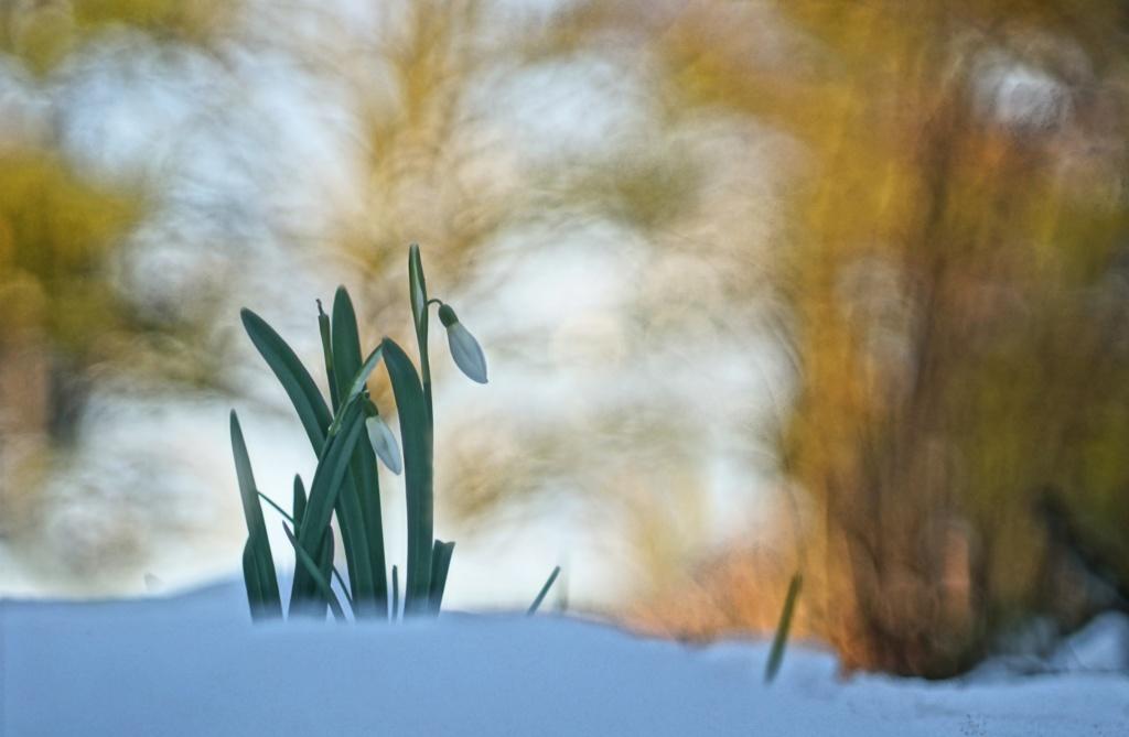 Comme un air de printemps Premiz10