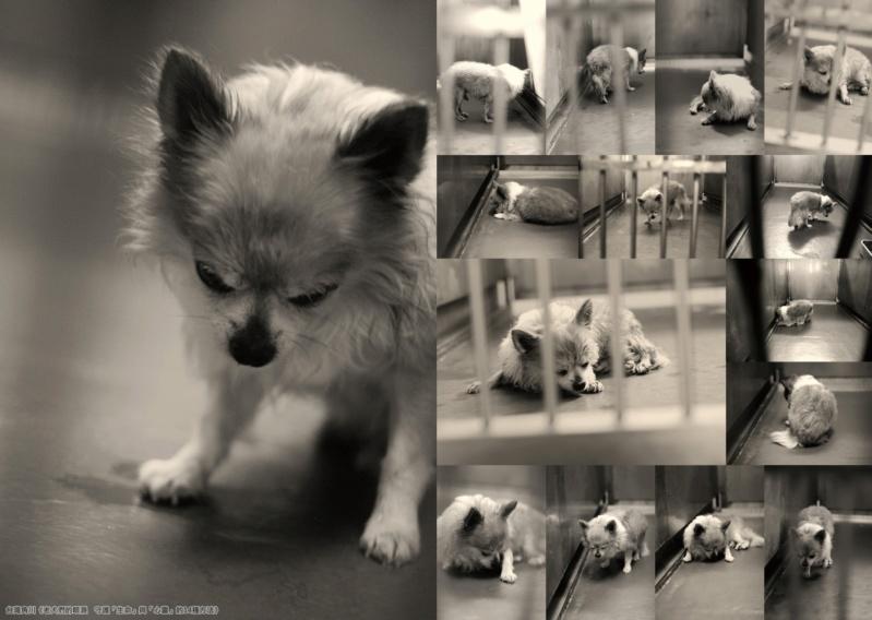 「我,想回到媽媽的身邊」 兒玉小枝著作《老犬們的眼淚》 公開日本棄養寵物收容所殘酷現況 01_aao10
