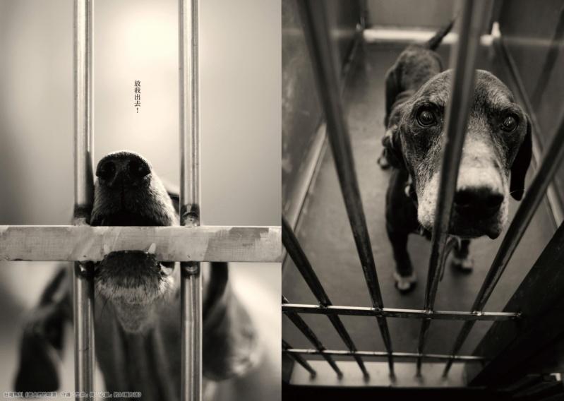 「我,想回到媽媽的身邊」 兒玉小枝著作《老犬們的眼淚》 公開日本棄養寵物收容所殘酷現況 02_aao10