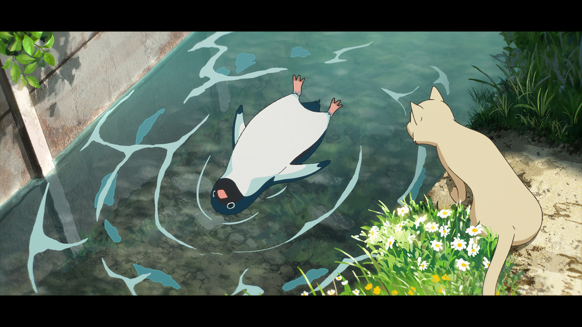電影《企鵝公路》畫面和場景 0614_p13