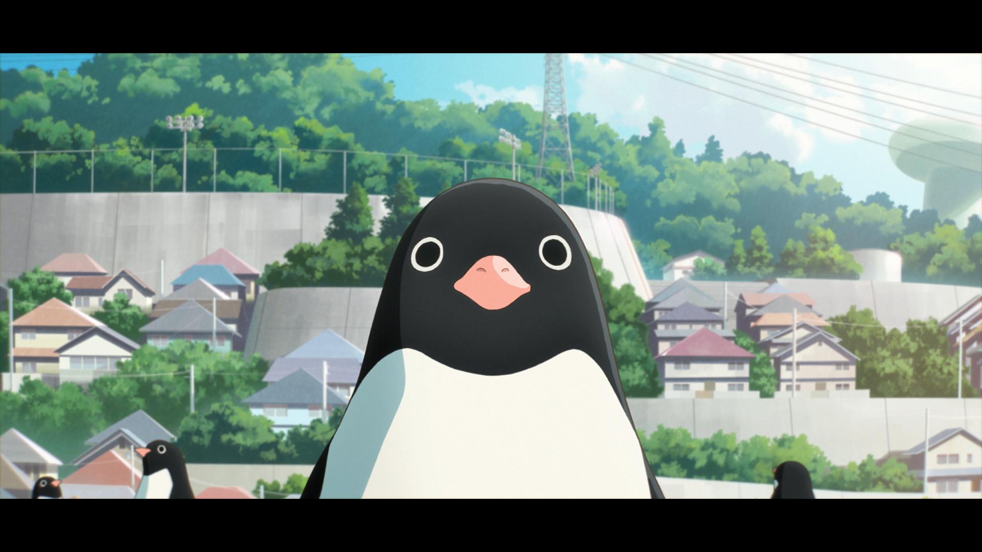 電影《企鵝公路》畫面和場景 0614_p14