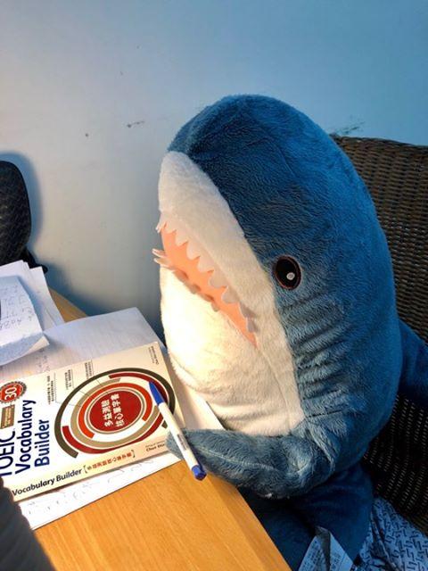 【屋友分享】  我昨天回到家時,發現到我家的鯊鯊在念英文!? 67291410