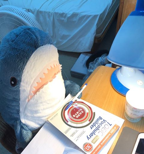 【屋友分享】  我昨天回到家時,發現到我家的鯊鯊在念英文!? 67818710