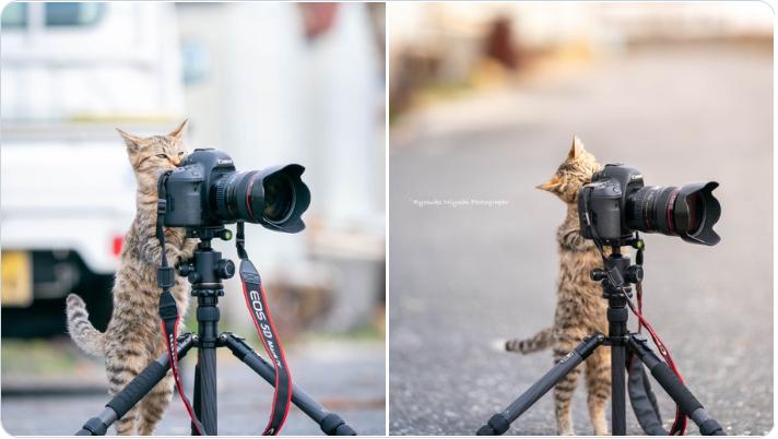 1月27日帖文整理 Cat11