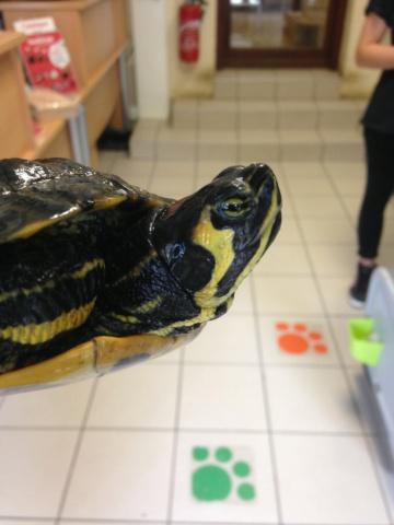 Conseils pour tortue trouvée Img_8410