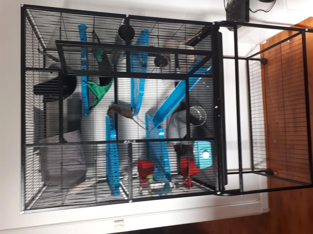 cage neo silta 20180612
