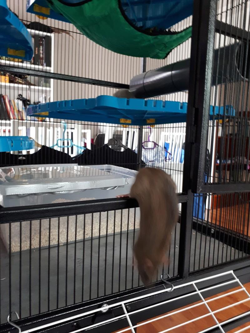 cage neo silta 20180613