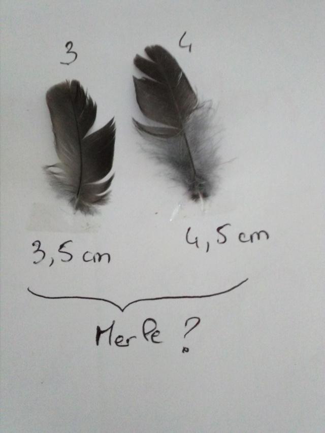 Quelques plumes des Vosges Img_2010