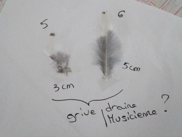 Quelques plumes des Vosges Img_2011