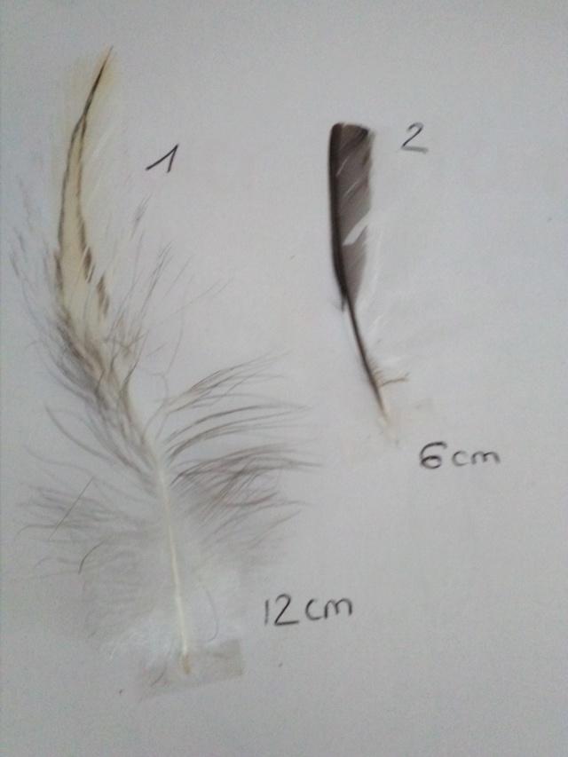 Quelques plumes des Vosges Img_2012