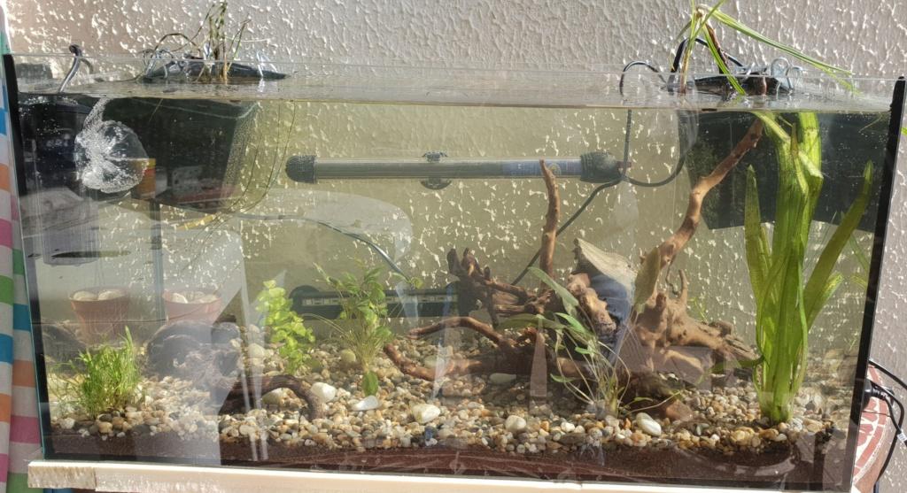 60L low tech/no tech extérieur: Fin de l'expérience, l'aquarium n'est plus ! Img_2018