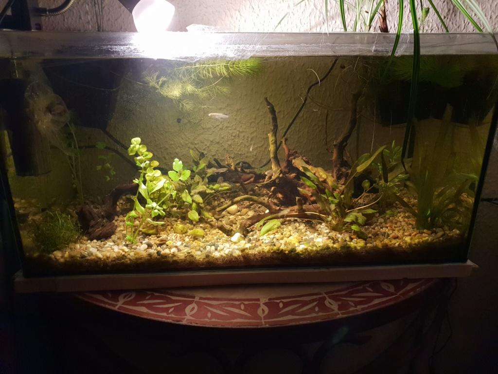 60L low tech/no tech extérieur: Fin de l'expérience, l'aquarium n'est plus ! Img_2019