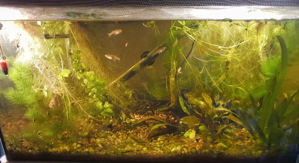 60L low tech/no tech extérieur: Fin de l'expérience, l'aquarium n'est plus ! Img_2020