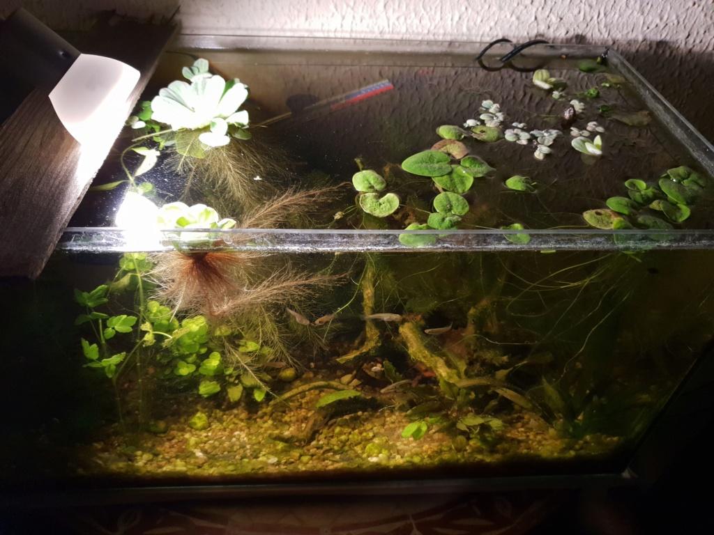 60L low tech/no tech extérieur: Fin de l'expérience, l'aquarium n'est plus ! Img_2021