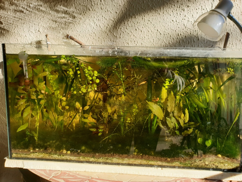 60L low tech/no tech extérieur: Fin de l'expérience, l'aquarium n'est plus ! Img_2027