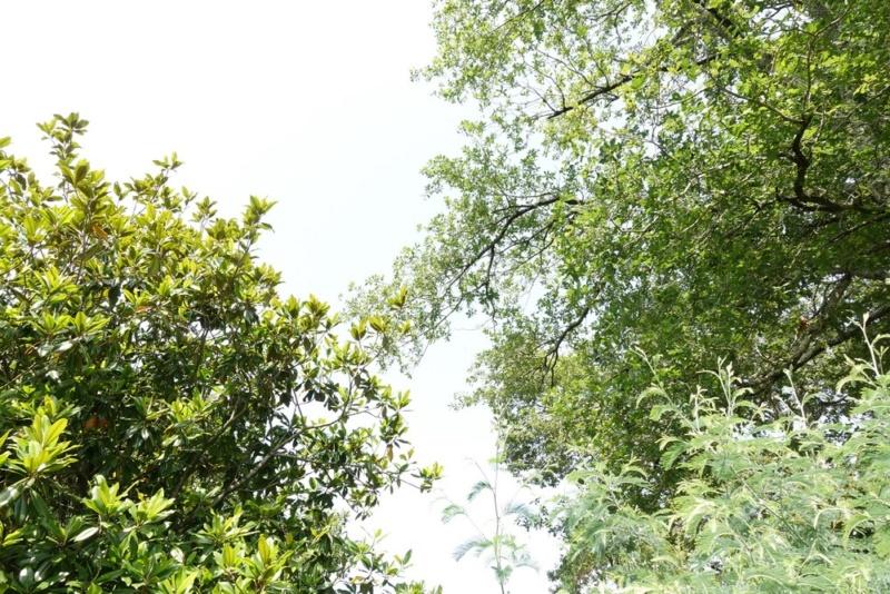 Feuille arbre jardin (si c'est ça) Mode M Arbre_11