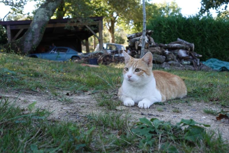 Mon chat (quel regard) Chat10