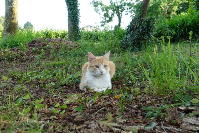 Le chat pose beaucoup mieux (non) ? Chat_a10
