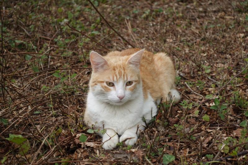 Mon chat mieux poser (avis) Dsc00110